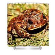 Toad Shower Curtain