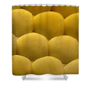 Tokay Gekko Scales Shower Curtain