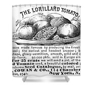 Tomato Advertisement, 1889 Shower Curtain