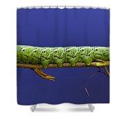 Tomato Hornworm Shower Curtain