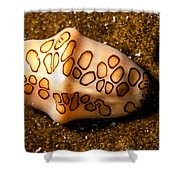 Flamingo Tongue On A Plate Shower Curtain