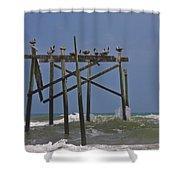 Topsail Ocean City Pelicans Shower Curtain