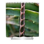 Torch Aloe Symmetry Shower Curtain