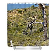 Torry Pines Sentinal Shower Curtain