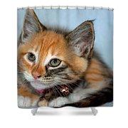 Tortoiseshell Kitten Shower Curtain