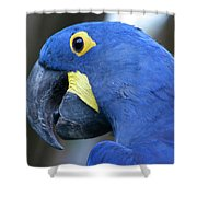 Totally Blue  Shower Curtain
