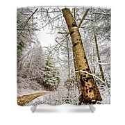 Touch Of Gold Shower Curtain by Debra and Dave Vanderlaan
