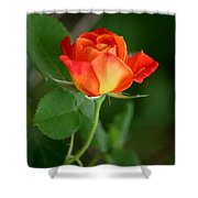 Touch Of Summer Shower Curtain