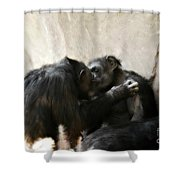 Touching Moment Gorillas Kissing Shower Curtain