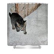 Tough Barn Kitten Shower Curtain