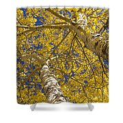 Towering Autumn Aspens With Deep Blue Sky Shower Curtain