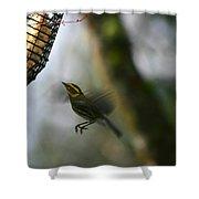 Townsend Warbler In Flight Shower Curtain
