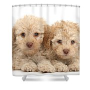 Toy Labradoodle Puppies Shower Curtain