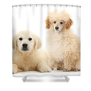 Toy Poodle And Golden Retriever Shower Curtain