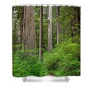 Trail Through Redwoods Shower Curtain