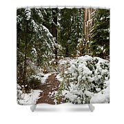 Trail Through Snow-decked Redwood Grove Shower Curtain