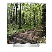 Trail Through Spring Forest Bavaria Shower Curtain