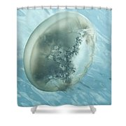 Translucent Jellyish Floating Shower Curtain