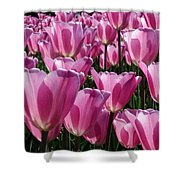 A Field Of Translucent Tulips Shower Curtain