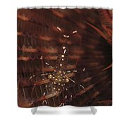 Transparent Shrimp On A Brown Feather Shower Curtain