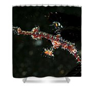 Transparent White And Red Harlequin Shower Curtain