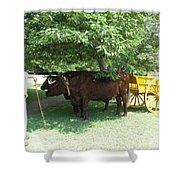 Transportation. Colonial Williamsburg. Virginia Shower Curtain