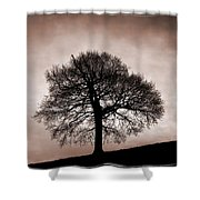 Tree Against A Stormy Sky Shower Curtain