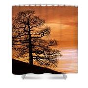 Tree Against A Sunset Sky Shower Curtain