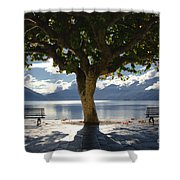 Tree And Benches Shower Curtain