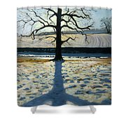 Tree And Shadow Calke Abbey Derbyshire Shower Curtain by Andrew Macara