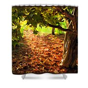 Tree And Shadows Shower Curtain