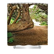 Tree And Trail Shower Curtain