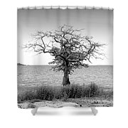 Tree And Water Shower Curtain