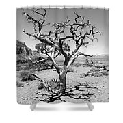 Tree At Cedar Ridge Bw Shower Curtain