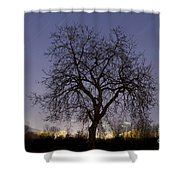 Tree At Night With Stars Trails Shower Curtain