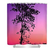 Tree At Twilight Shower Curtain