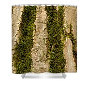 Tree Bark Mossy 4 C Shower Curtain