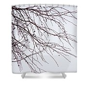 Tree Branch Nature Abstract Shower Curtain