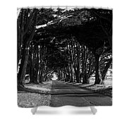 Tree Canopy Promenade Road Drive . 7d9977 . Black And White Shower Curtain
