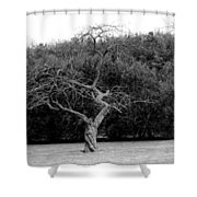 Tree Dancer Shower Curtain
