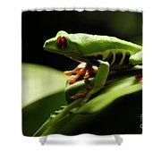 Tree Frog 13 Shower Curtain