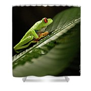 Tree Frog 2 Shower Curtain