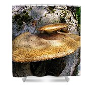 Tree Fungus 1 Shower Curtain