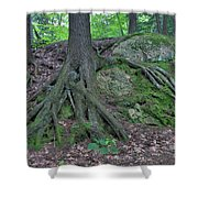 Tree Growing Over A Rock Shower Curtain by Ted Kinsman