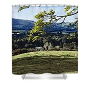 Tree In A Field, Great Sugar Loaf Shower Curtain