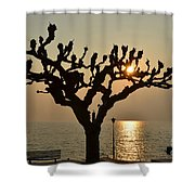 Tree In A Foggy Sunset Shower Curtain