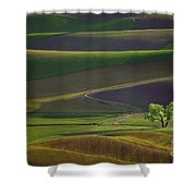 Tree In The Palouse Shower Curtain