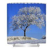 Tree In Winter, Co Down, Ireland Shower Curtain
