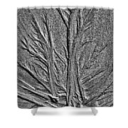 Tree Of Life In The Sands Of Time Hdr Conversion Shower Curtain