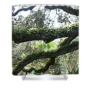 Tree Of Life Panorama Shower Curtain